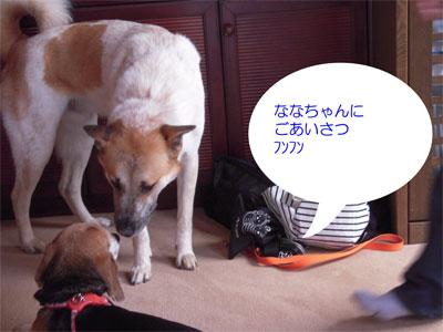 20090313005.jpg